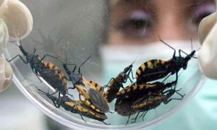 Mariana Sanmartino: ¿De qué hablamos cuando hablamos de Chagas?