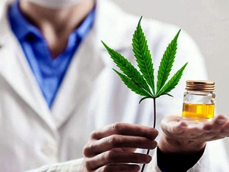 El 75,5% de los usuarios de cannabis medicinal redujeron el consumo de fármacos